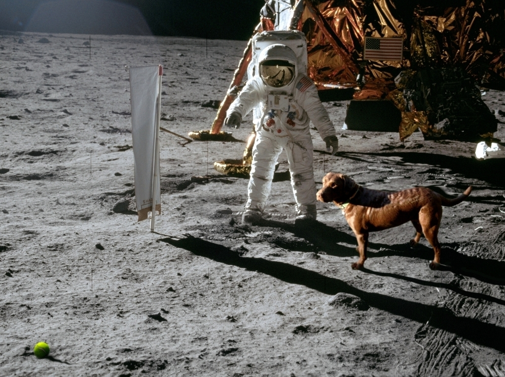funny moon landing - photo #11